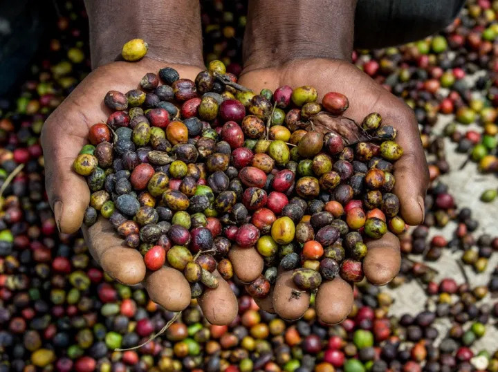 Tanzania Berries