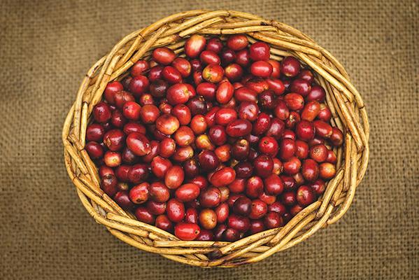 Sumatran Specialty Coffee
